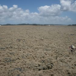 Tiny cute crabs are in abundance at low tide